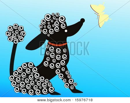 poodle looking at butterfly