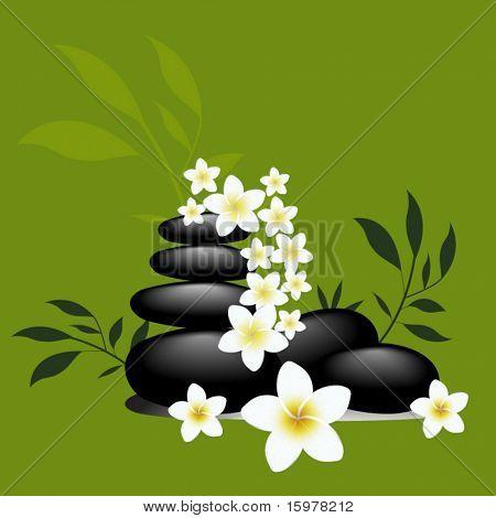 frangipani flowers and spa rocks
