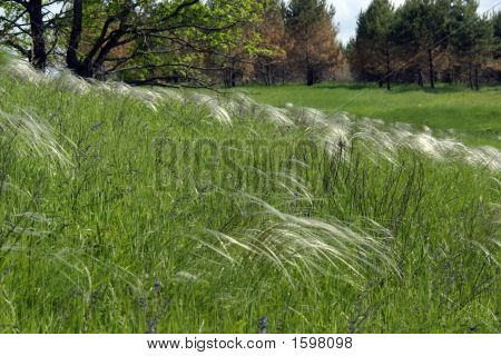 Forest-Steppe