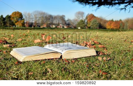Book reading in the park in a sunny day
