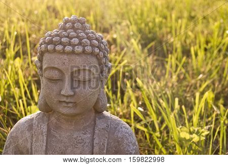 Portrait of Buddha on sunny meadow and ray. Symbol of Buddhism religion
