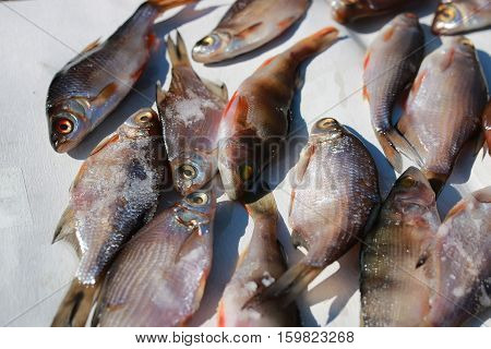 fish prepared on a rope for the impact of traditional food and snacks peoples of the north