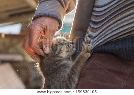 Cute cat hugging man outdoors in village