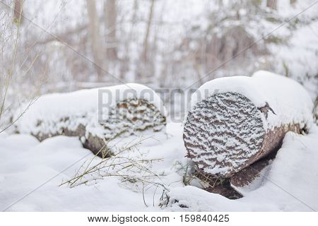 Closeup of the end of a logs in a cold winter weather