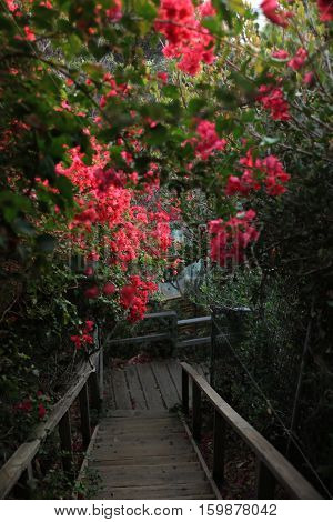 Down the flower stairs to beach paradise