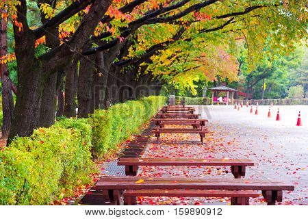 road with wood tables and benches in park