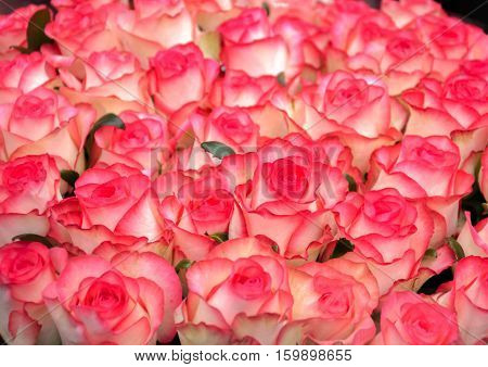 beautiful bouquet of pink roses to your loved ones prazniki birthday valentines day wedding