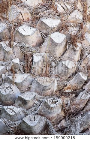picture on foreground of a palm tree trunk