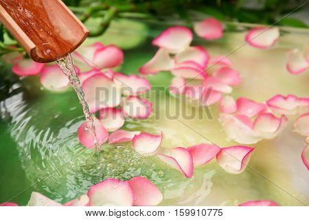 Beautiful spa composition with flower petals on water