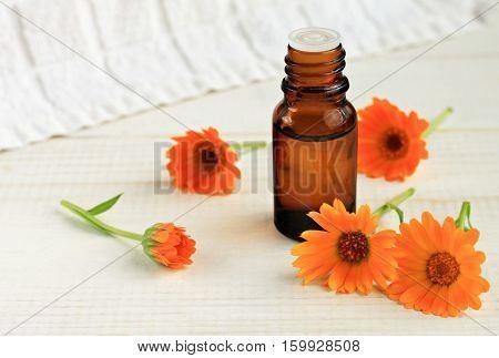 Calendula massage oil. Botanical holistic skincare. Fresh bright marigold flowers, herbal essence dropper bottle.