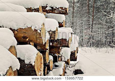 Logs Stacked Under The Snow In The Forest