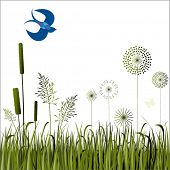 picture of bull rushes  - grasses flowers and bird - JPG