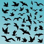stock photo of caw  - squall of birds - JPG
