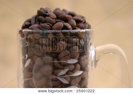 close up of Glass coffee mug filled with unground coffee beans on a gold background