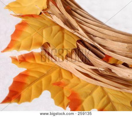 Raffia And Fall  Leaves Close Up F