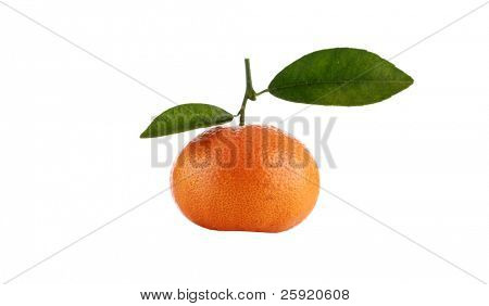fresh picked off the tree honey mandarin tangerine isolated on a pure white background