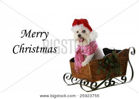 Fifi the Bichon Frise in various poses all isolated on white with Holiday Greetings. Greetings can be removed and replaced with your text