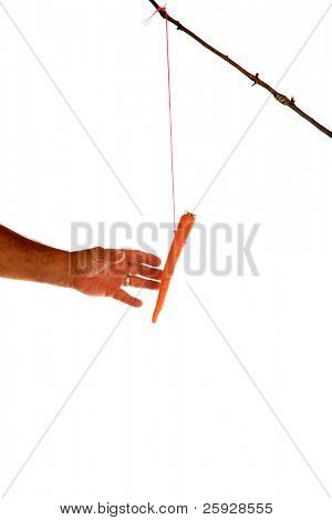 "The classic business metaphor of ""carrot on a stick"" isolated on white with room for your text"