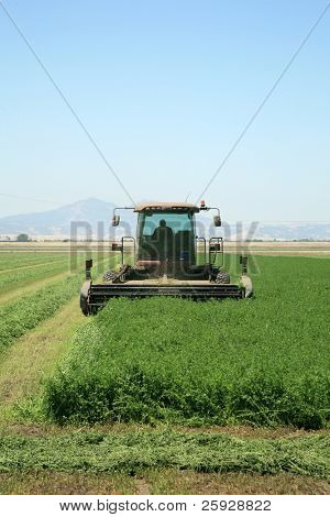 A genuine combine harvester cutting a field of alfalfa in a field in central california on a summer day. butterflies are flying all around in the air as the smell of fresh alfafa fills the senses