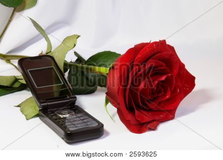 Beautiful Red Rose With Telephone Not Forget