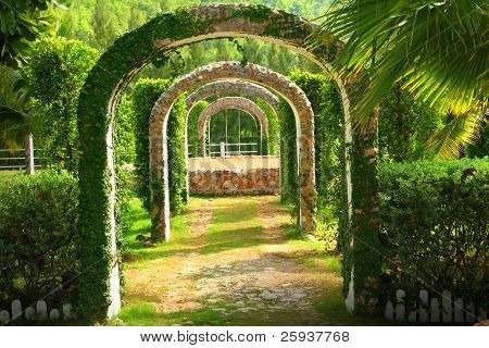 Pergola And Plant In A Garden