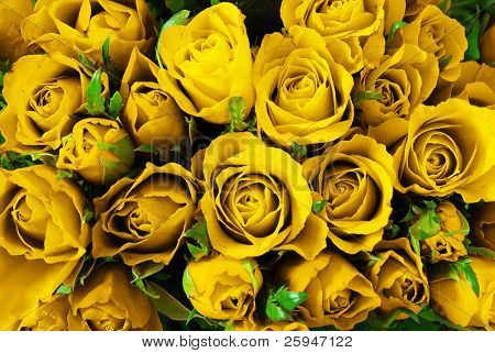 Yellow roses background - natural texture of love