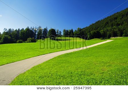 Beautiful alpine meadow with green grass with the road and forest