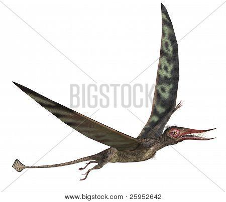 Rhamphorhynchus Dinosaur