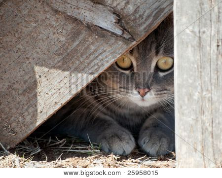 Hide a kitty - cat hiding under wooden steps