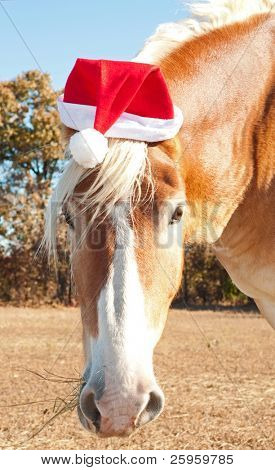 Santa's big huge helper - a beautiful blond Belgian Draft horse wearing a Santa hat ready to help