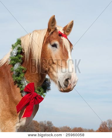 Beautiful blond Belgian Draft horse wearing a Christmas wreath around his strong neck