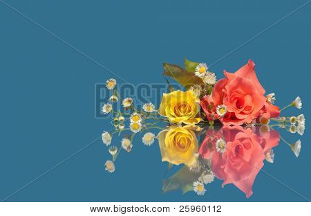 Pink and yellow rose with tiny white wild flowers on blue background with reflection
