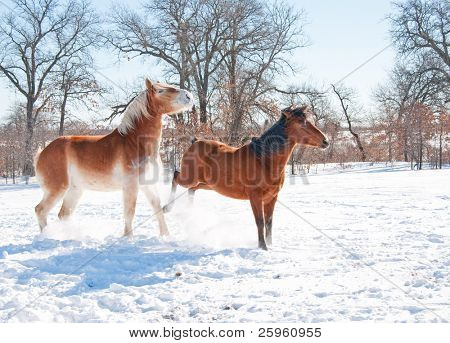 Small horse kicking out at a big horse in snow on a cold winter day
