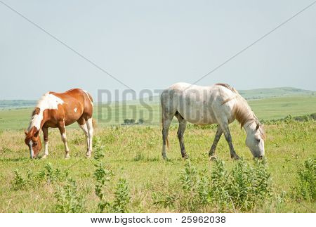 Two horses grazing in pasture against open prairie landscape