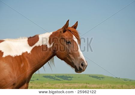 Young paint horse with prairie background