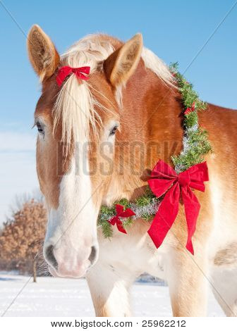 Closeup of a Belgian draft horse with a Christmas wreath and a bow in his mane in snowy winter landscape