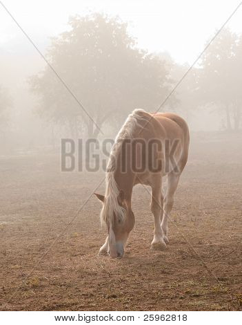 Blond Belgian draft horse in heavy fog