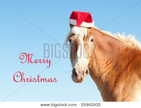 Belgian Draft horse wishing Merry Christmas as Santa's Helper, wearing a Santa hat