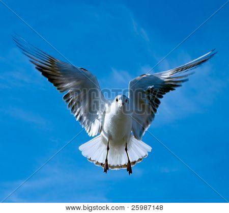 Nahaufnahme von Möwe, fliegen über blauer Himmel