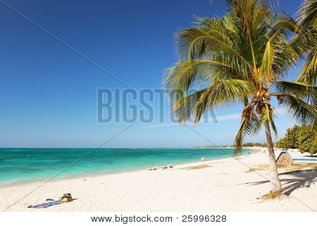 Caribbean Island Paradise - Palm trees hanging over a sandy white beach with stunning turquoise waters