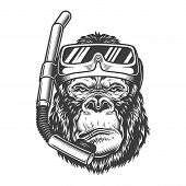 Vintage Arrogant Gorilla Diver With Scuba Mask And Snorkel In Monochrome Style Isolated Vector Illus poster