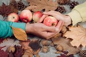 Autumn Apple In Hands. Autumn Background With Apples Acorns And Leaves. Black Friday Sales And Shopp poster