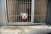 A sad little white dog stuck in an Animal Shelter waiting for someone to adopt him