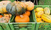 Pumpkins At Market Autmn Seasonal Food Fall poster