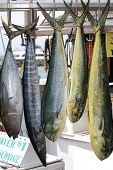 foto of mahi  - Fresh caught fish on the hawaiian island of maui - JPG
