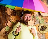 Rainy Weather Forecast Concept. Fall Atmosphere Attributes. Hipster With Beard Mustache Expect Rainy poster