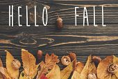 Hello Fall Text. Hello Autumn Sign On Bright Colorful Autumn Leaves With Acorns And Nuts On Rustic W poster