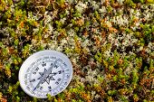 Reliable Compass On Moss In Tundra. Concept For Travelling And Active Lifestyle poster
