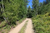 Taiga Dirt Road On A Sunny Summer Day poster