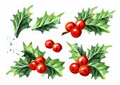 Christmas And New Year Symbol Decorative Holly Berry Set. Watercolor Hand Drawn Illustration, Isolat poster